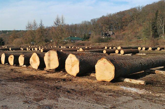 Rekordowe ceny podczas szczecińskiej submisji surowca drzewnego