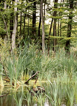 Efektem prac CKPŚ będzie  renaturalizacjia 10 tys. ha terenów podmokłych,