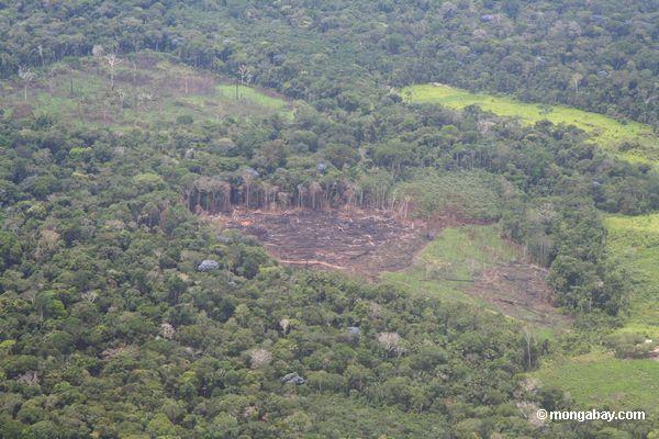 Las deszczowy niszczony w celu pozyskania terenów rolniczych