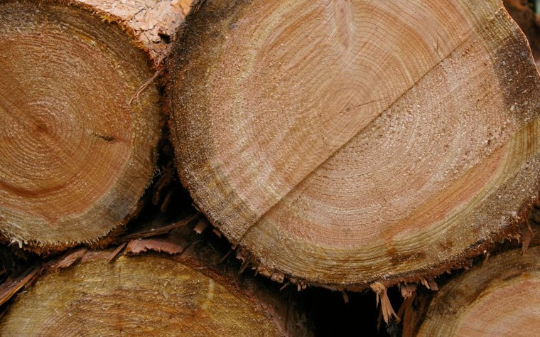 Nowe zasady sprzedaży drewna z Lasów Państwowych