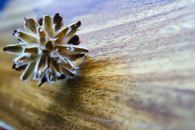 Podłoga drewniana Royal Floor Tali