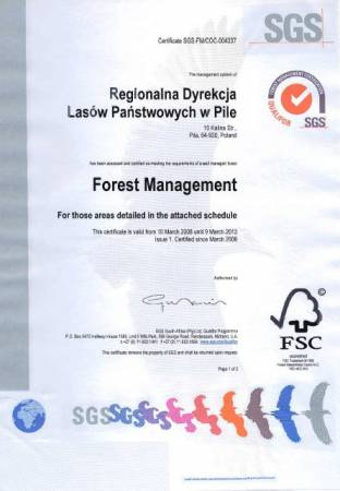 Certyfikat FSC dla RDLP w Pile