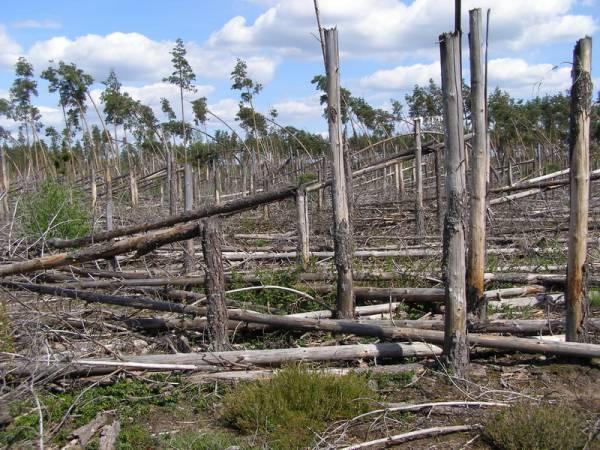 Las ochronny Szast w Nadleśnictwie Pisz – tu przyroda rządzi się sama