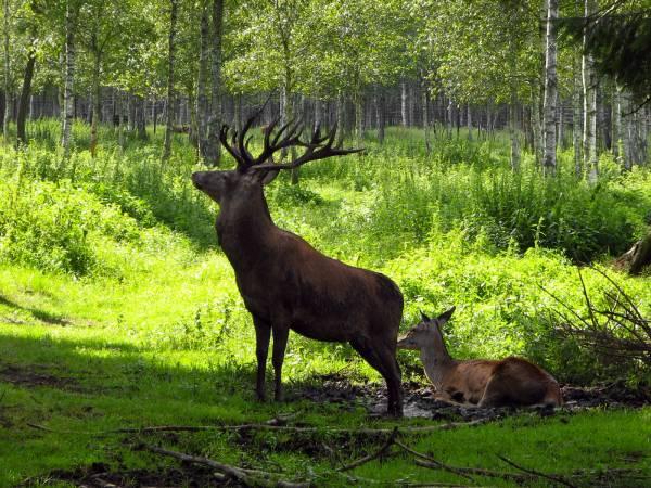 Brak otuliny był sprawą fatalną, brak strefy ochrony zwierząt - błędem