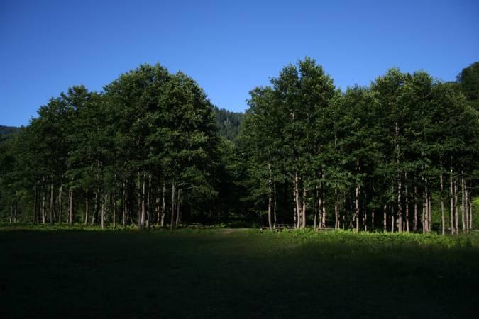 Małoskalowe leśnictwo jest istotnym, potencjalnym źródłem dostaw certyfikowanego drewna w Europie