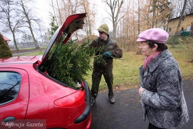 Halina Kasprzak w tym roku, tak jak w poprzednim, choinkę kupiła w Żołędowie. Obok sprzedawca Paweł Frieske.