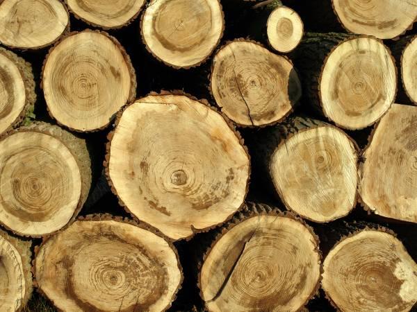 Około 5,5 mln zł – na taką sumę Lasy Państwowe oszacowały poniesione w 2008r. straty z tytułu kradzieży, wandalizmu i kłusownictwa