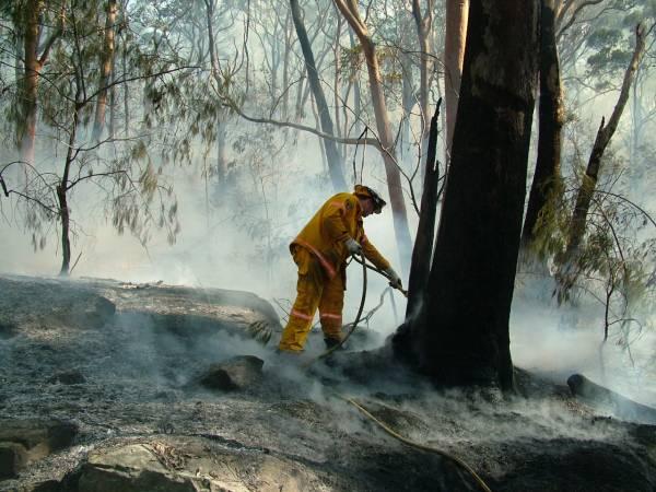 Przyczyną leśnych pożarów były w 60 proc. podpalenia.