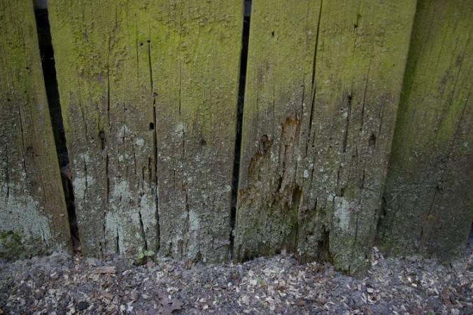 Nowoczesne środki ochrony drewna pomagają uniknąć takich sytuacji