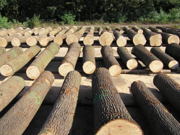 Drewno dębowe przygotowane do submisji