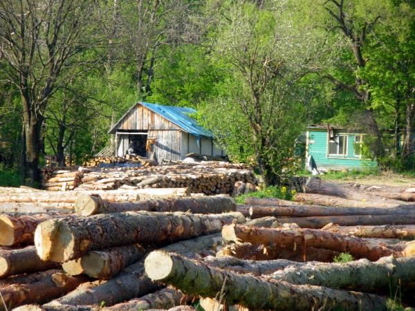 Brak stabilnych zasad zakupu surowca sprawie, że inwestowanie w branży drzewnej przypomina grę w ruletkę, co jest jedna z głównych przyczyn istnienia w Polsce tartaków jak ten na zdjęciu.