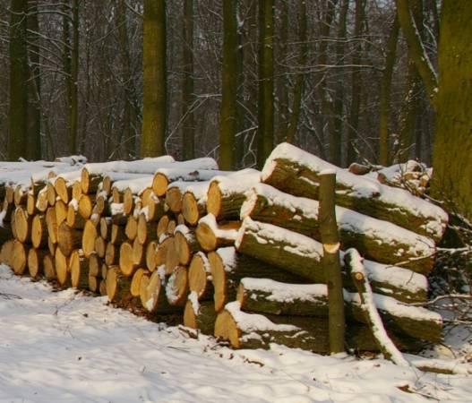 Drewno w stosach czekające na klienta to łatwy łup dla złodziei