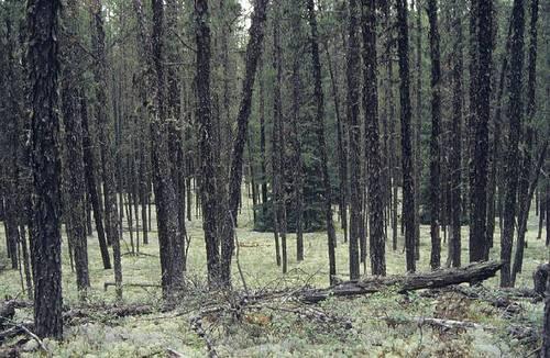 Las na północy stanu Ontario, Kanada