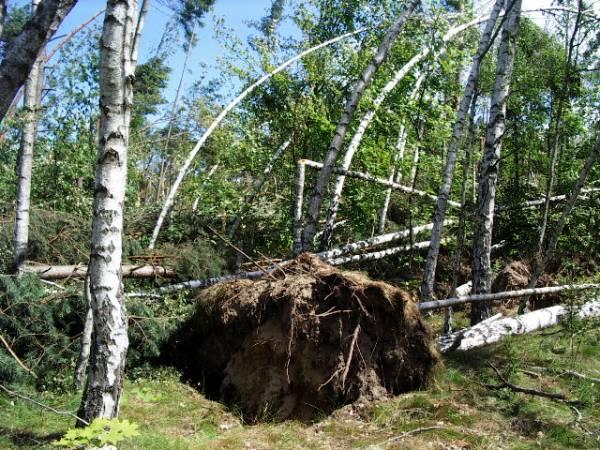 Straty po huraganie szacowane są na 100 tys. m3