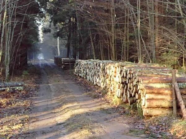 Puszcza Białowieska, ok. 300 m przed Rezerwatem Dębowy Grąd, 2008r.