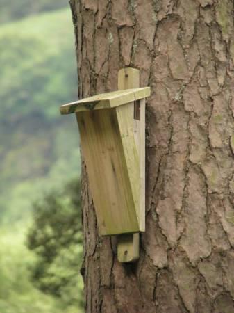 Skrzynka dla nietoperzy