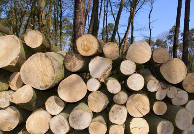 Surowiec drzewny trafi do zakładów przetwórstwa drewna, a nie do kotłowni