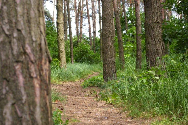 """Czy przedsiębiorcy po raz kolejny zostaną """"wyprowadzeni w las""""?"""