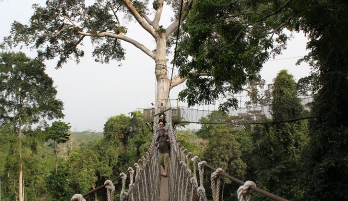 Spacer po wiszacych mostach Parku Narodowego Kakum