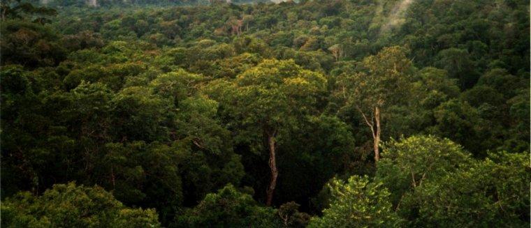Las deszczowy na północ od brazylijskiego Manaus