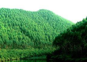 Plantacje leśne w Chinach
