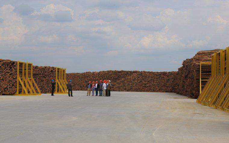 Skład surowca drzewnego fabryki Swedspan w Koszkach