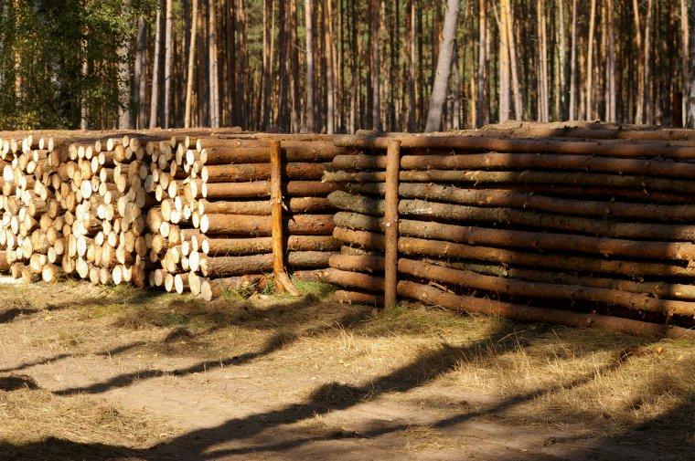 Drewno z lasu powinno trafiać do zakładów przemysłu drzewnego, a nie do pieca