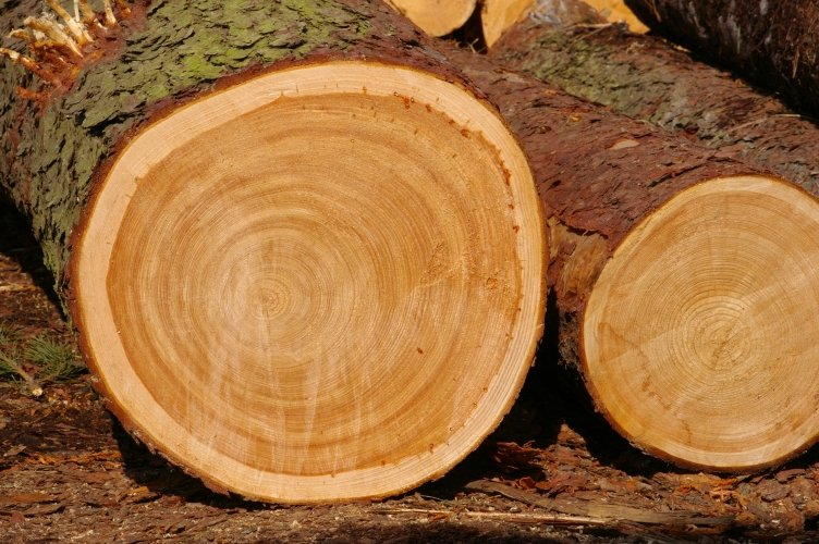 Kłody drewna sosnowego