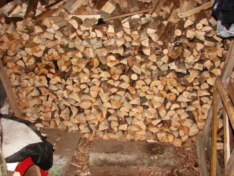 Badania DNA pomagają w walce ze złodziejami drewna