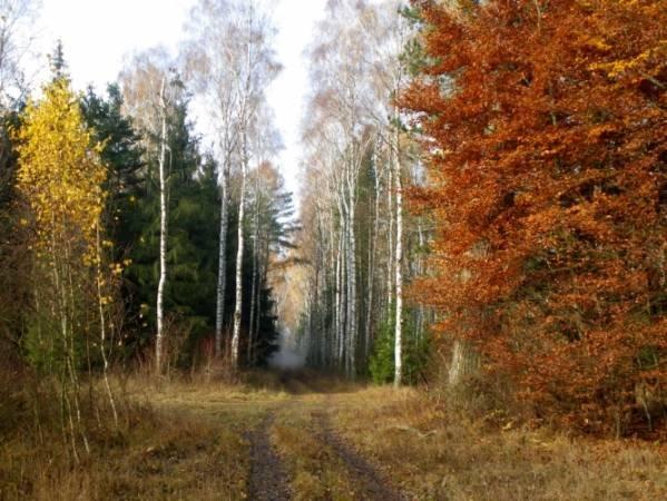 Jesienny las w Wielkopolsce