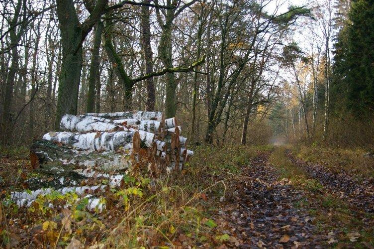Dzięki nowelizacji zasad i instrukcji lasy w Polsce będą lepiej chronione, zdrowsze, a jednocześnie ciężar decyzyjny w zakresie gospodarki leśnej w większym stopniu przesunie się na poziom nadleśnictwa – powiedział Marian Pigan.