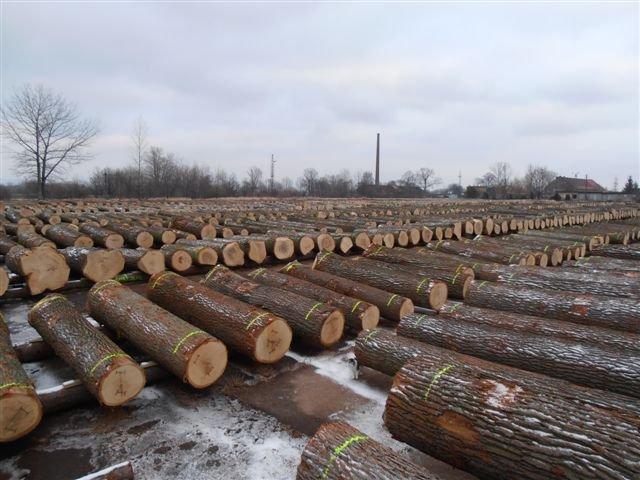 Kłody drewna cennego na placu w Mościsku