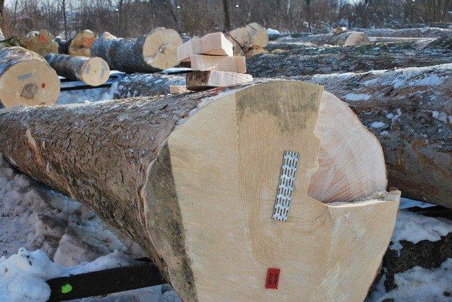 """XIII Submisja drewna cennego """"Krosno 2012"""""""