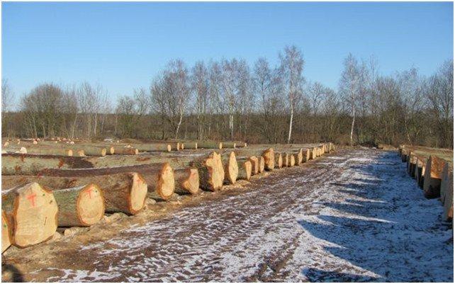 Drewno przygotowane do sprzedaży podczas submisji