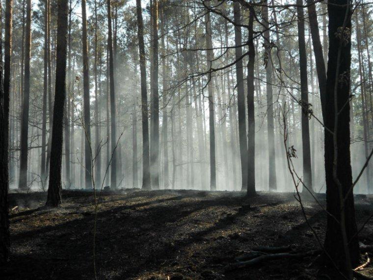 Nadleśnictwo Antonin: Największy tegoroczny pożar lasu