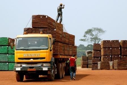 Transport drewna egzotycznego w Afryce.