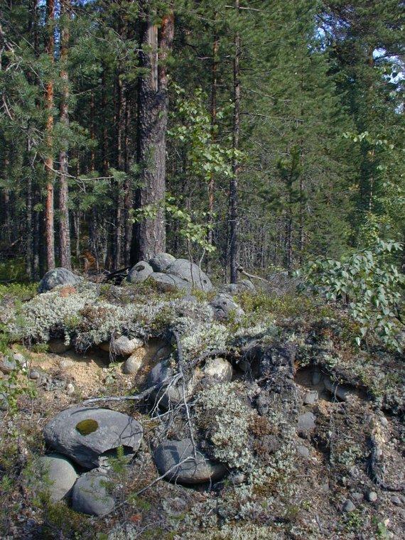 Las w Karelii