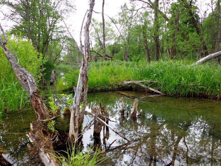 Pieniądze z funduszu leśnego posłużą ochronie przyrody