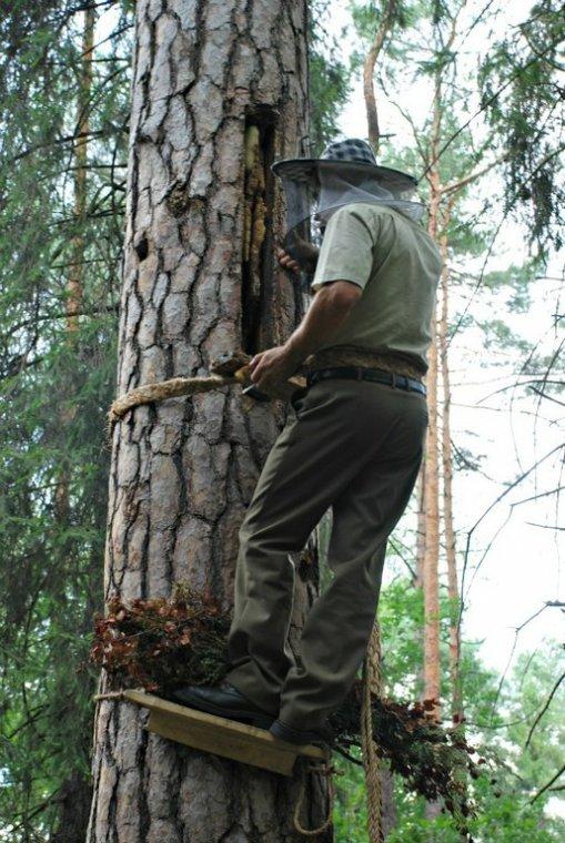 Baszkirzy pomagają odtworzyć w Polsce bartnictwo