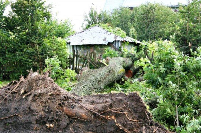 Letnie burze niszczą lasy