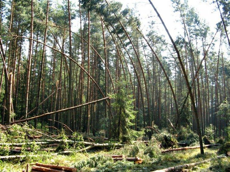 Szkody po burzach w podlaskich lasach