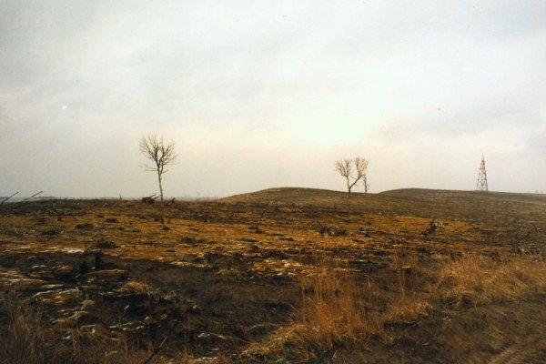 Obraz spustoszeń dokonanych przez pożar w 1992r. w leśnictwie Kotlarnia