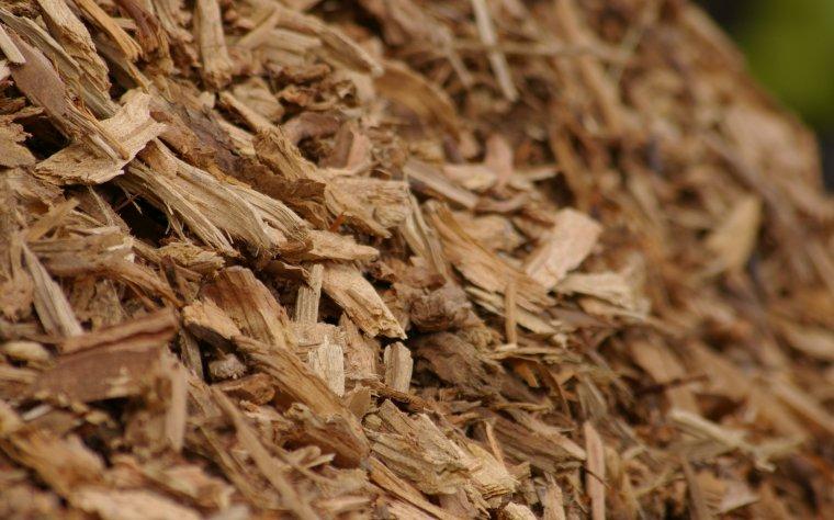 Konferencja: Możliwości oraz uwarunkowania podaży drewna do celów energetycznych