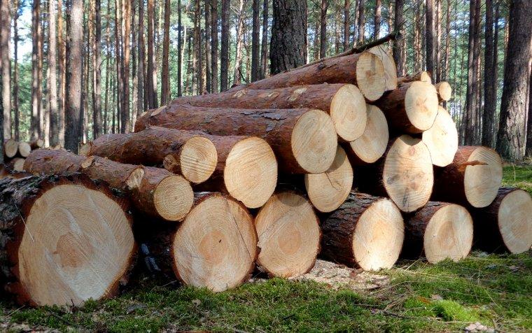 GUS opublikował średnią cenę sprzedaży drewna w 2012r.