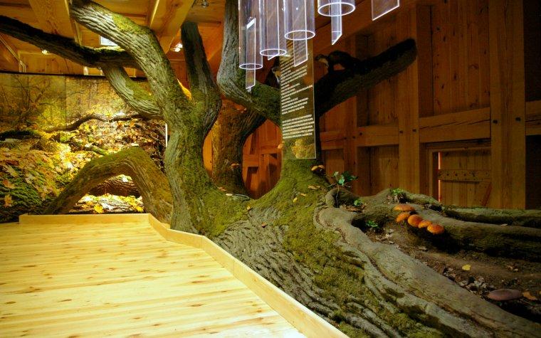 Ośrodek Edukacji Leśnej w Łysym Młynie (Nadl. Łopuchówko) jest częścią projektu związanego z ochroną pachnicy dębowej