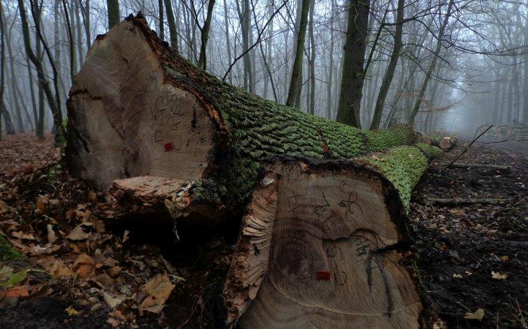 Nowe zasady sprzedaży drewna