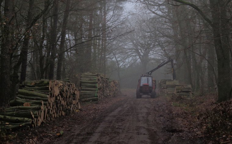 Lasy Państwowe podały harmonogram sprzedaży surowca drzewnego na rok 2013