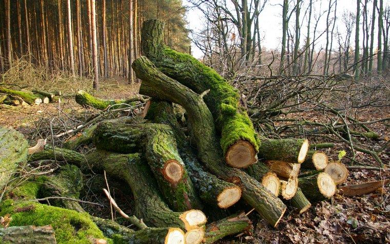 Branżowe organizacje protestują przeciw zapisom nowych zasad sprzedaży drewna