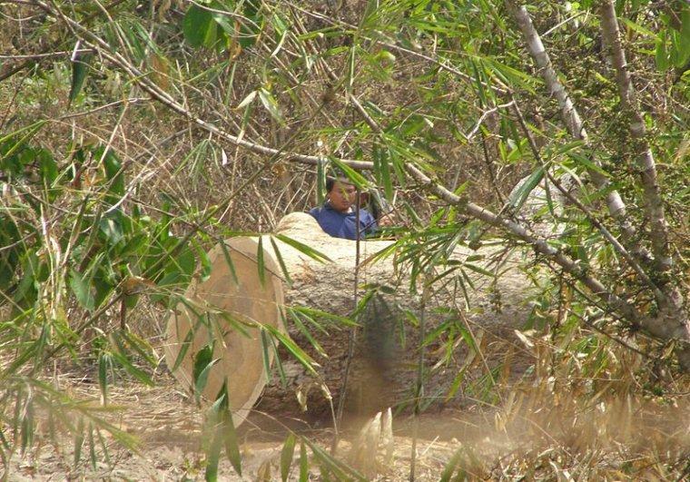 Nielegalne pozyskanie drewna w Tajlandii