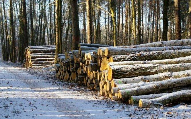 Zakończył się I etap sprzedaży surowca drzewnego na 2013